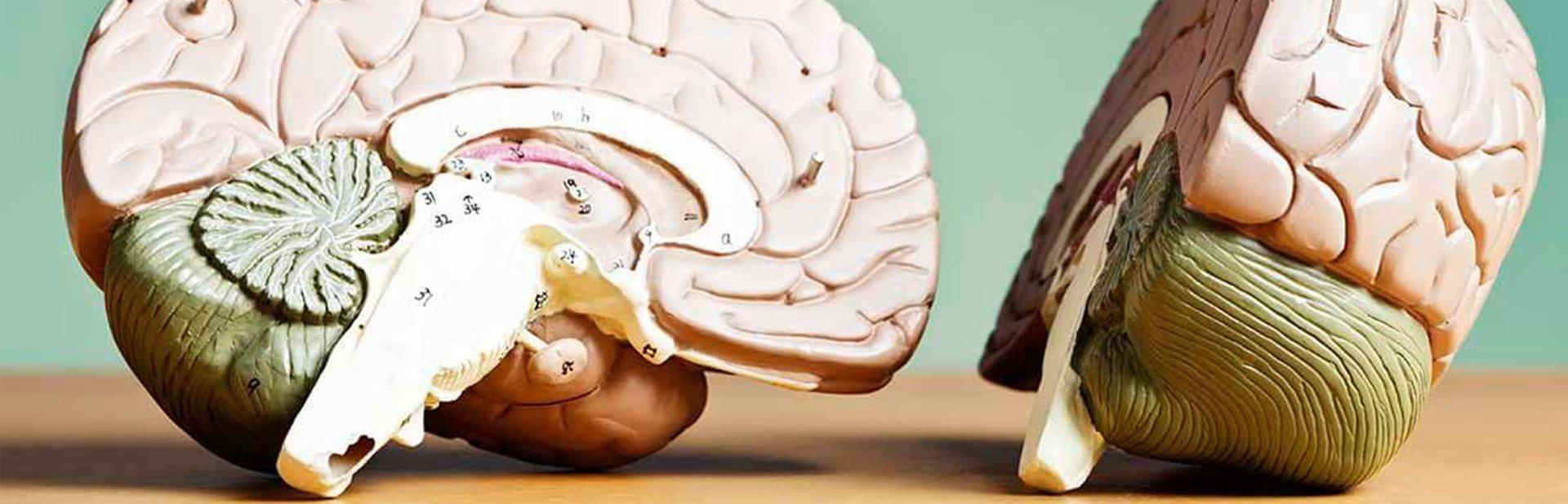 Máster Universitario en Fisioterapia Neurológica: Técnicas de Valoración y Tratamiento