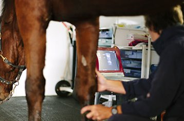 HEROpeque-instalaciones-caballos.jpg