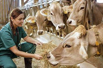 HEROpeque-instalaciones-veterinaria-granja-docente.jpg